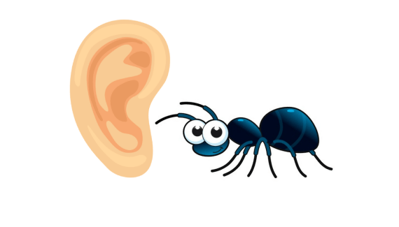 what to do when an insect goes into your child's ear