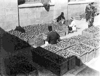 Sorting jaffa oranges 1920s
