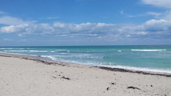 Great dog beach