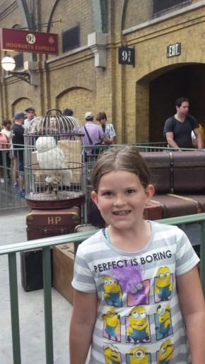 Harry's Owl