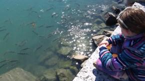 Feeding fish Fort Pierce