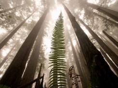 RedwoodsNPforWeb