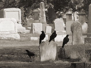 the crows.