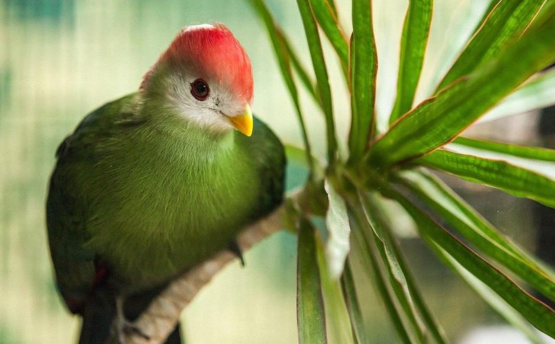 National Bird of Angola