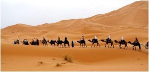 What Is the National Desert Of Egypt?