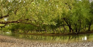 National Forest of Bangladesh