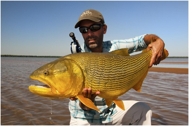 What Is The National Fish of Argentina?