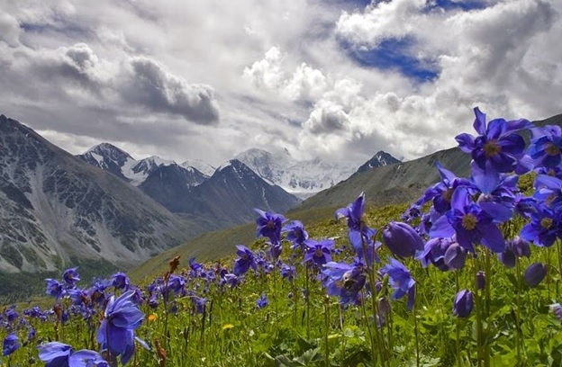 What Is The National Flower of Bhutan?