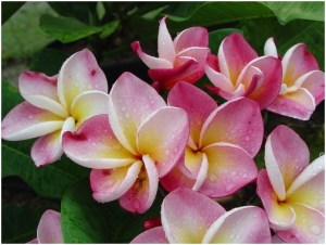 What Is The National Flower of Nicaragua?