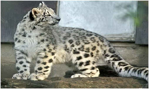 National heritage animal of Pakistan