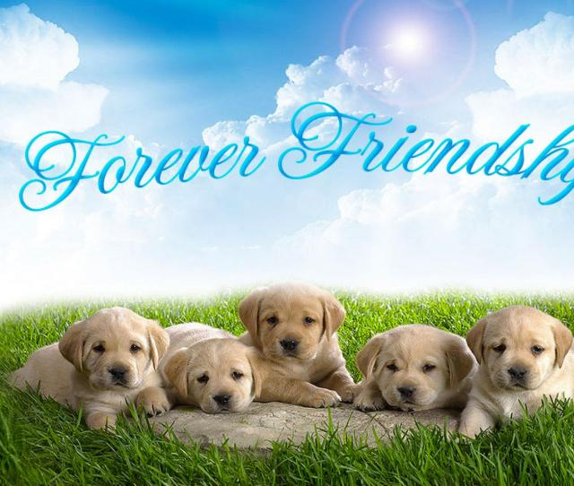 Download Friendship Day Image For Whatsapp Dp