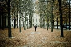 Berlin City Trees - Rach