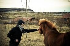 Icelandic Horse - Rachel