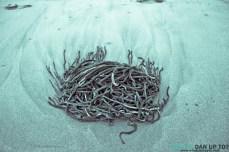 Blue Seaweed Tenticles