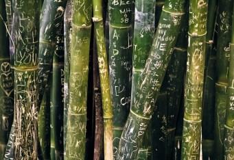 Green Bamboo Writing