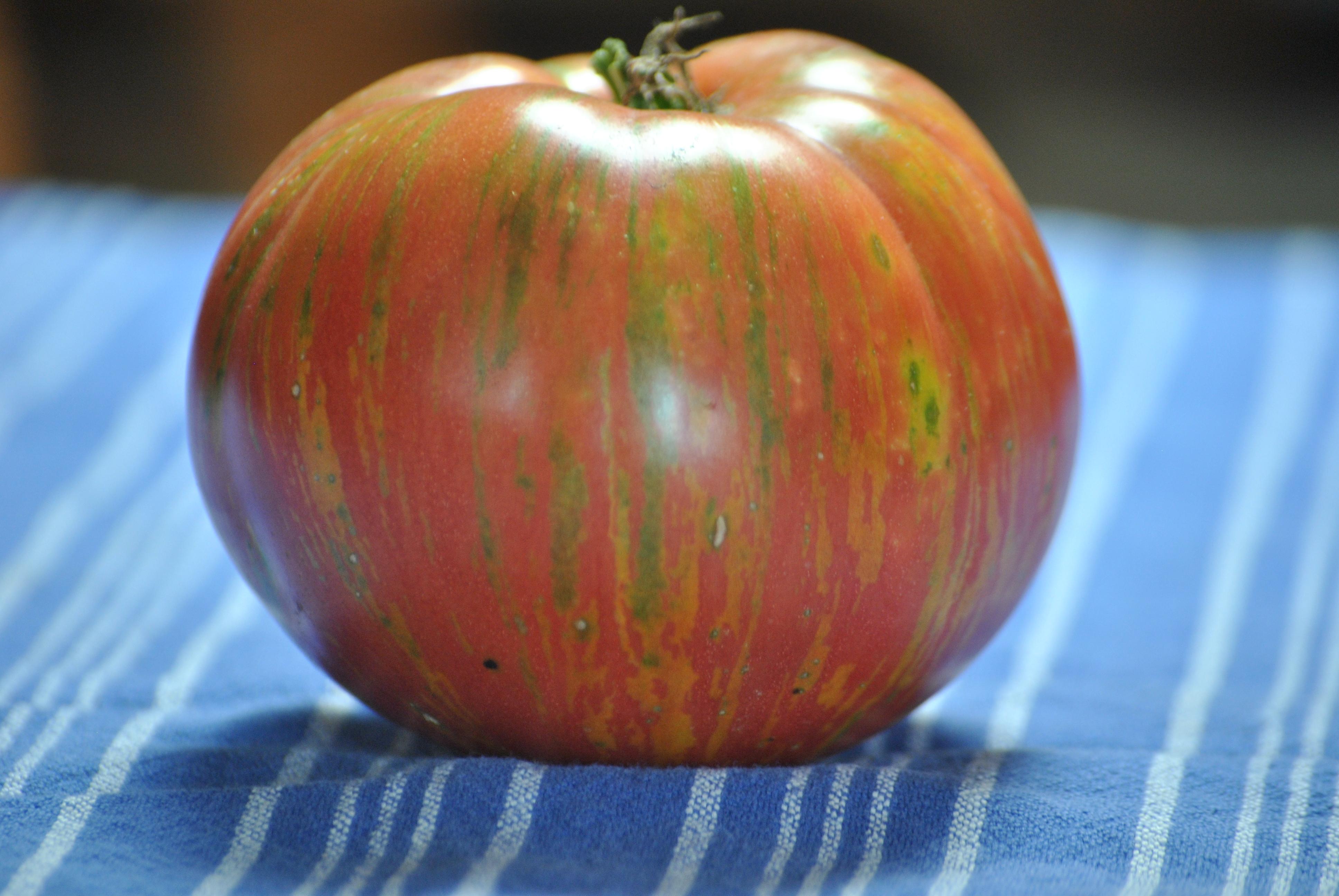 Solar Flare Wild Boar Tomatoes Whatsinyourgarden