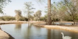 Wildlife at Al Qudra Lakes