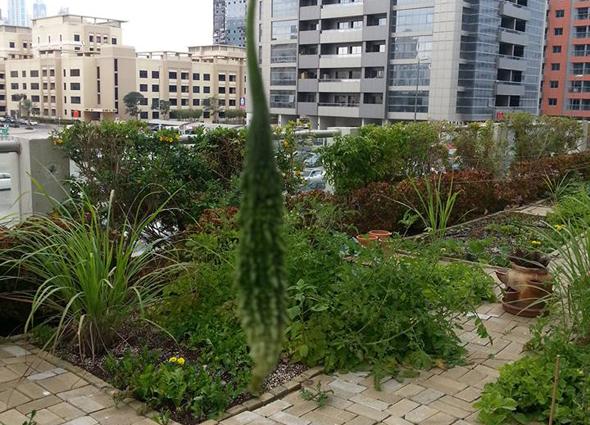 slow-food-garden