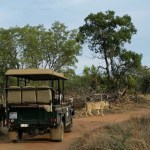 Dinokeng Game Reserve Self-Drive Route