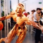 Review: Body Worlds & The Cycle of Life