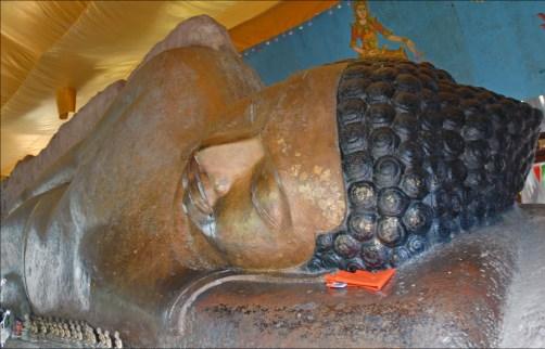 free buddha.jpg