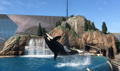 Tickets Seaworld San Diego Orca