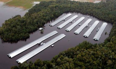 Florence's flooding claims 3.4 million poultry, 5,500 hogs