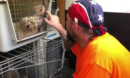 'More than 600 animals' found abandoned at NC site after Florence