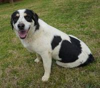 Columbia County pet adoptions