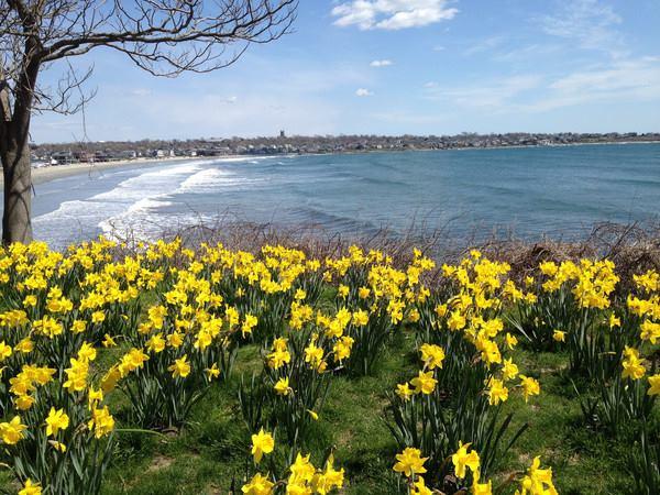 Newport Daffodil Festival