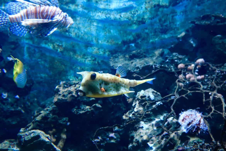 Artis aquarium.