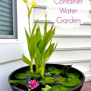How to Set up Mini Water Gardens on Your Deck