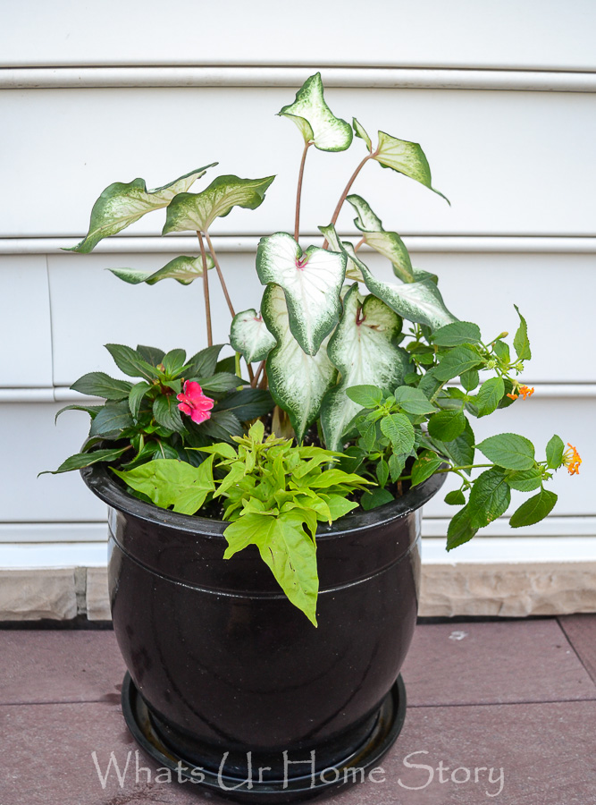 Container Garden that will bloom all Summer