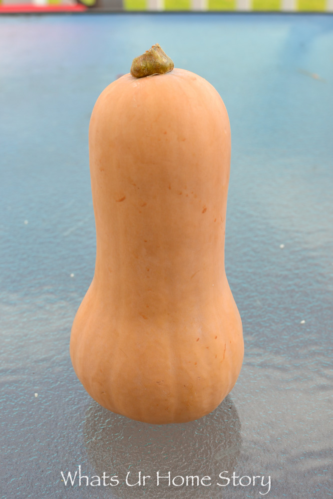 Can you believe this butternut squash can be vase?