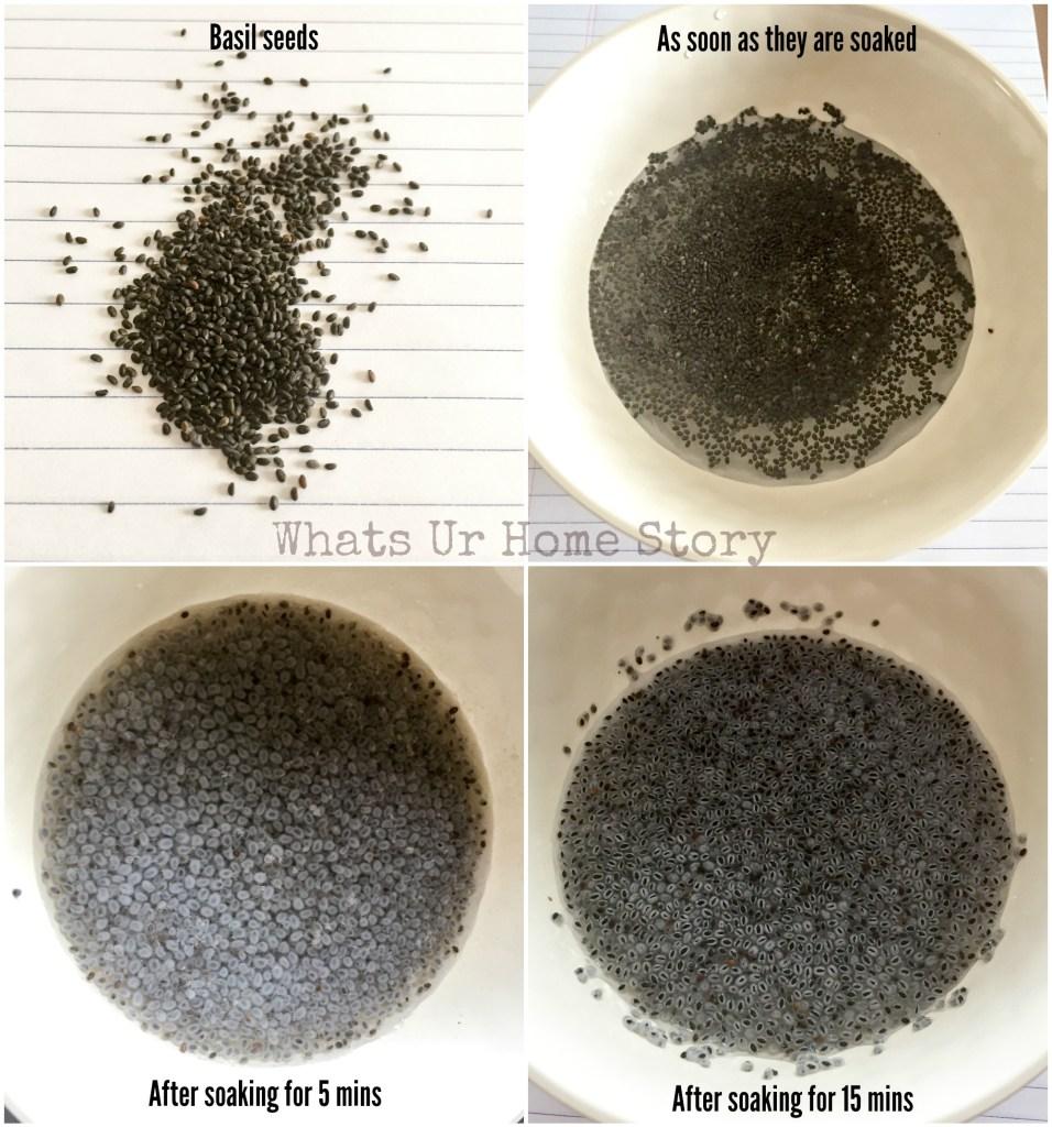 basil seeds or tukmaria seeds or subja seeds for making falooda