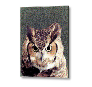 Owl by Patricia Griffin