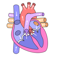 10 Interesting Facts About Heart