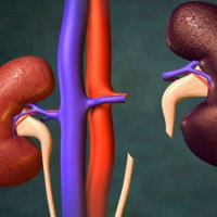 10 Interesting Facts About Kidneys