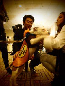 Adoption Puppy NY Pet Fashion Show