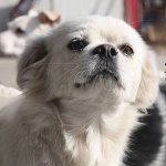 Help Save Sophia and Raise Awareness about the Yulin Festival