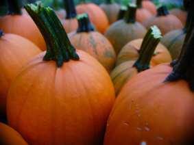 FreePumpkins1