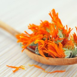 Calendula Salve Recipe