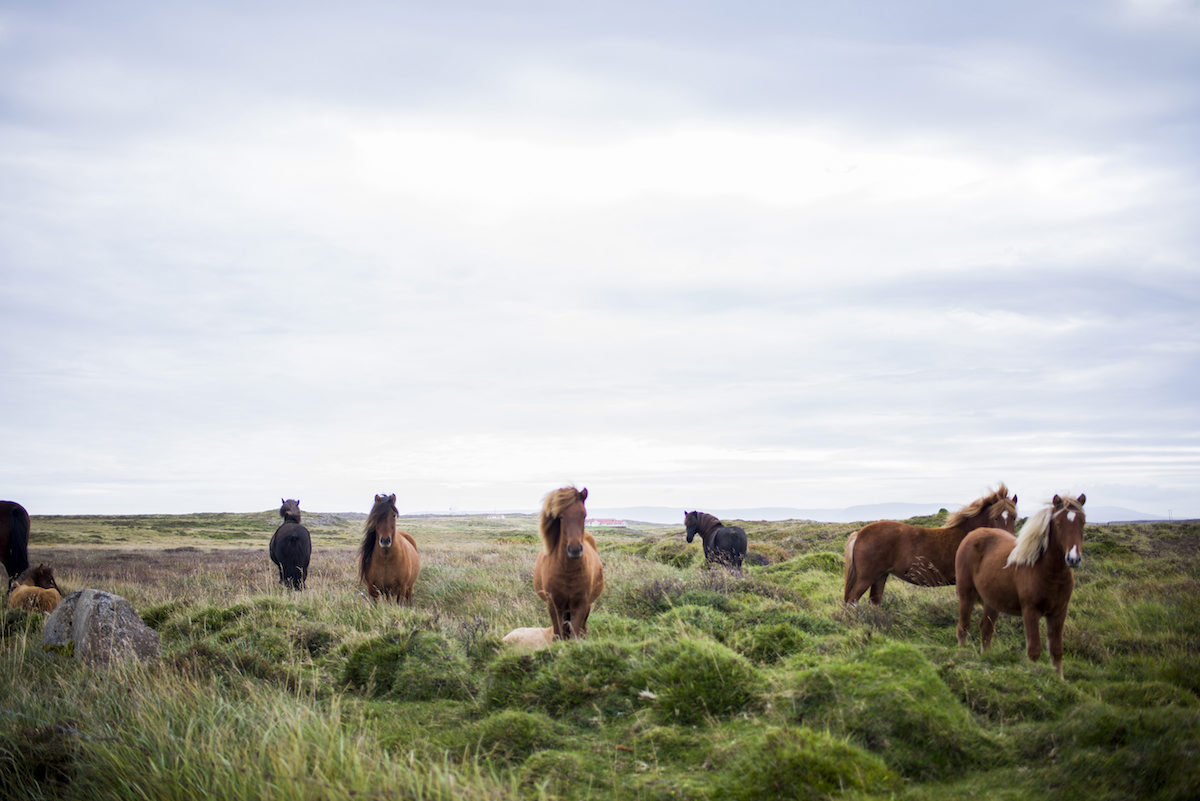 Tumeric Uses for Horses