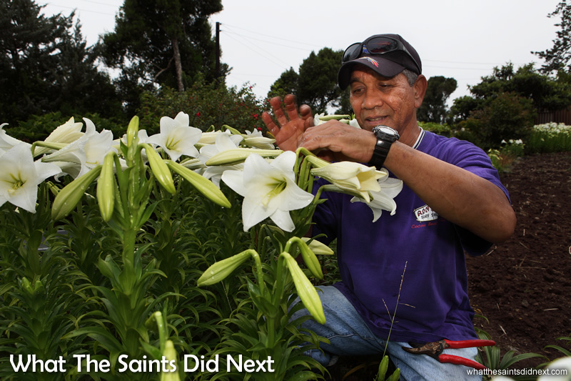Alex checking the lilies in his garden. The smell in the air is amazing.
