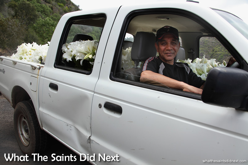 Alex on a Christmas flower delivery into town, the truck is fully loaded with lilies for sale.
