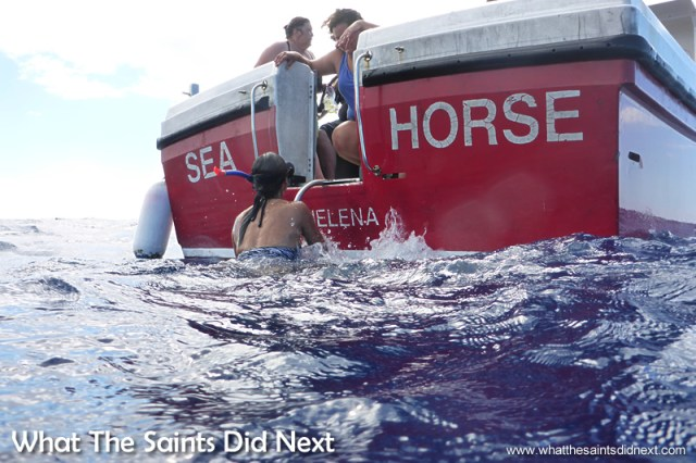 Climbing back onto the boat, the Sea Horse, after the first encounter swimming with whale sharks.