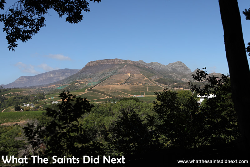 The beautiful scenery where Groot Constantia wine is made.