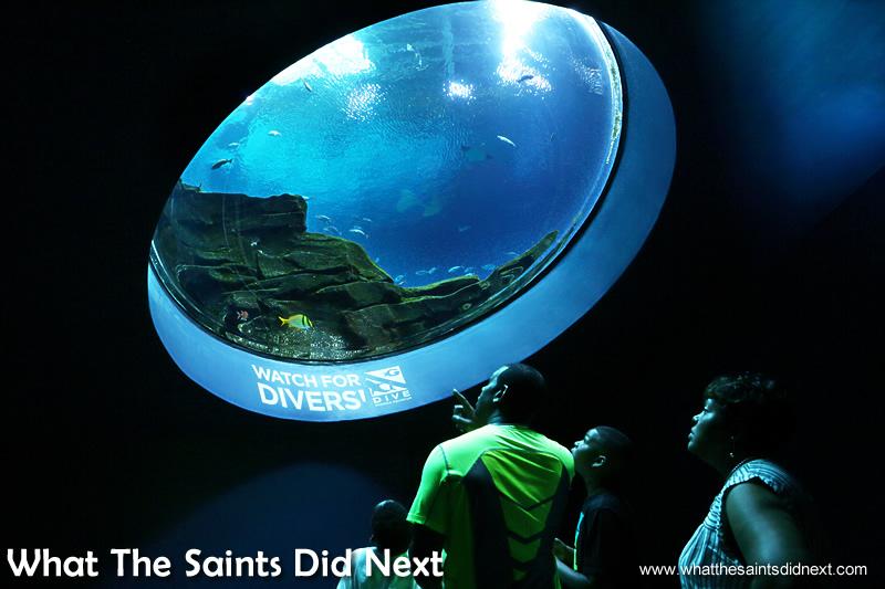 GA aquarium Atlanta visitors looking up through giant port hole.
