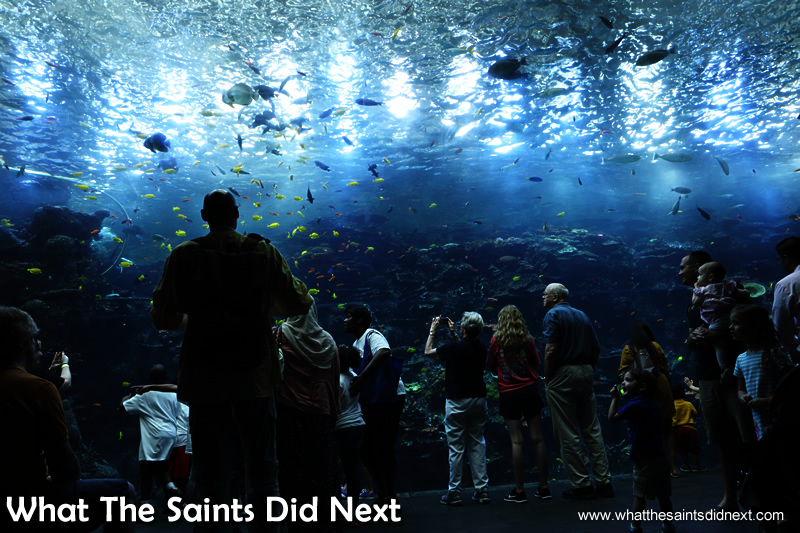 Another of the huge, panoramic displays which captivates both young and old visitors.