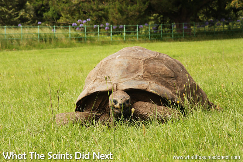 Things to do on St Helena - Meet Jonathan the tortoise who is around 183 years old.